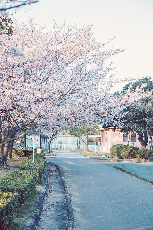 道と桜は親和性がある